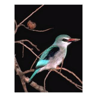 Woodland kingfisher Mara River Camp Kenya Flyer