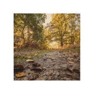 """Woodland path"" design wall art"