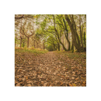 """Woodland path"" design wall arts Wood Canvases"