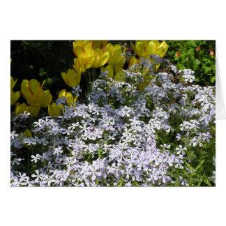 Woodland phlox (Phlox divaricata) card