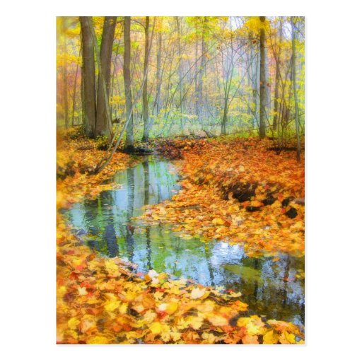 Woodland stream, postcards