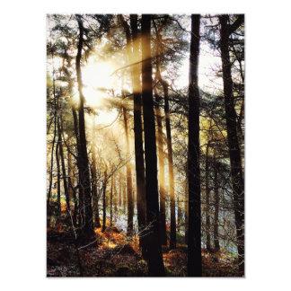 Woodland sunrise landscape, poster