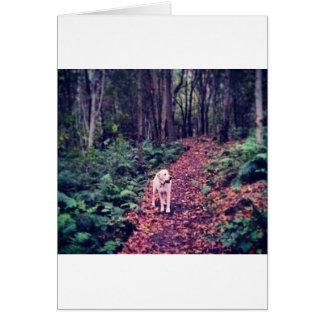 Woodland Walk Card