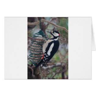 Woodpecker eating card
