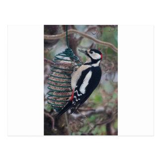 Woodpecker eating postcard