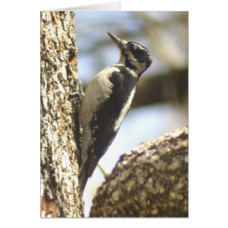 Woodpecker humor Card