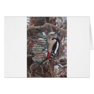 Woodpecker in Action Card