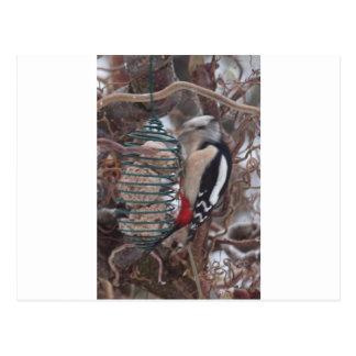 Woodpecker in Action Postcard