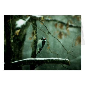 Woodpecker in Snow Greeting Card