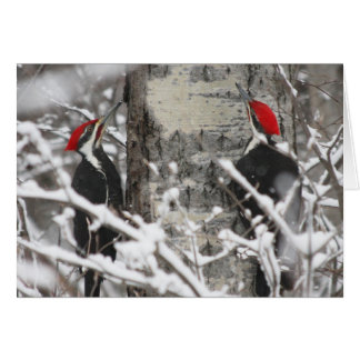 Woodpecker In Winter Card