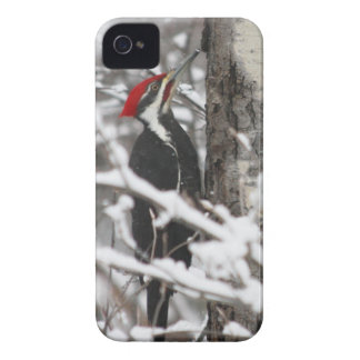 Woodpecker - iPhone 4 Case