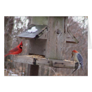 Woodpecker&Male Cardinal Card