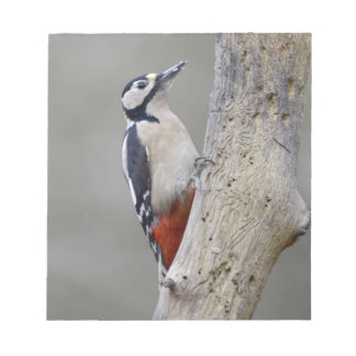 Woodpecker Notepad