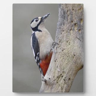 Woodpecker Plaque