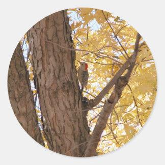 Woodpecker Round Stickers