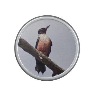 Woodpecker speaker