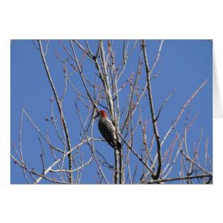 Woodpecker Up In Tree Card