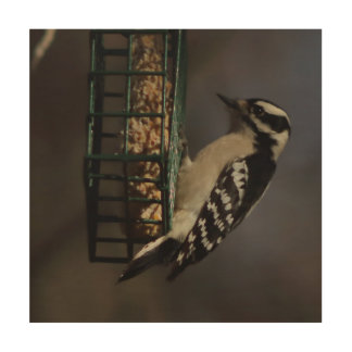 Woodpecker, Wood Photo Print. Wood Print
