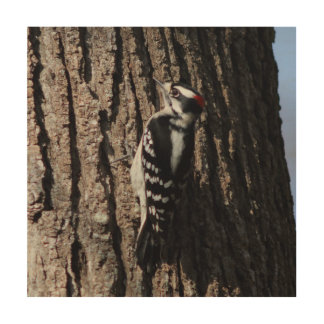 Woodpecker, Wood Photo Print. Wood Wall Art