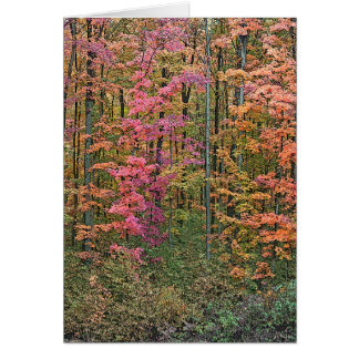 """""""WOODS IN AUTUMN"""" NOTECARD NOTE CARD"""