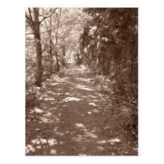 Woods Path--Sepia Postcard