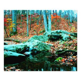 Woods Photo Print