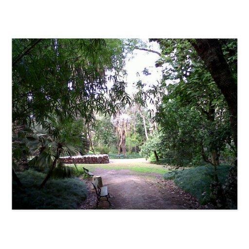 Woods Postcard