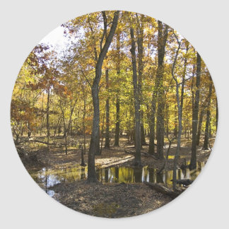 Woods with standing water round sticker