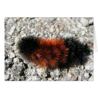 Woolly Bear Caterpillar Card