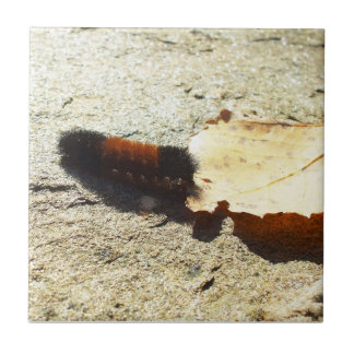 Woolly Bear Caterpillar Tile