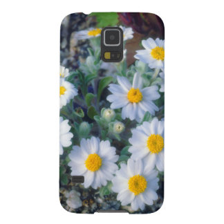 Woolly Daisy Wildflowers Galaxy S5 Cover
