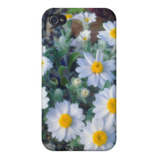 Woolly Daisy Wildflowers iPhone 4 Cover