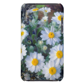Woolly Daisy Wildflowers iPod Touch Case-Mate Case