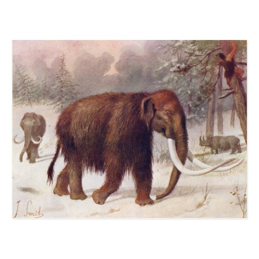 Woolly Mammoth Prehistoric Animal Antique Print Post Cards
