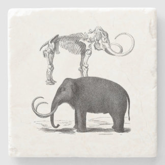 Woolly Mammoth Prehistoric Elephant and Skeleton Stone Beverage Coaster