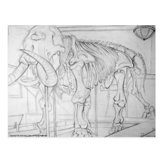 Woolly Mammoth Skeleton Postcard