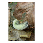 Wooly Bear Worm Photography