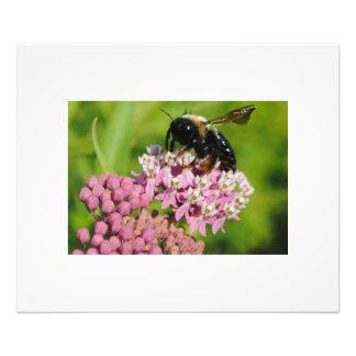 Working Bee Photograph