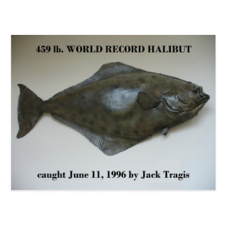 World Record Halibut caught in Dutch Harbor, AK Postcard