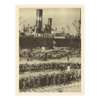 World War I Indian troops Alexandria Postcard