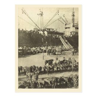 World War I Indian troops Alexandria Postcards