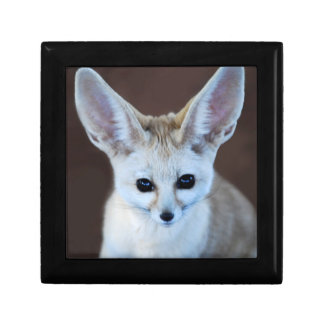 Worlds Cutest Fennec Fox Gift Box