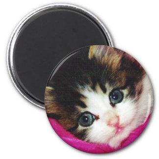 Worlds Cutest Kitten 6 Cm Round Magnet