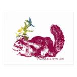 Worlds Only Painting Squirrel,Winkelhimer Smith Postcards
