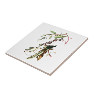 Worm eating Warbler John Audubon Birds of America Small Square Tile
