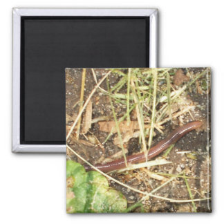 Worm in Grass Square Magnet