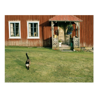 Worn red house with a cat on the lawn. postcard