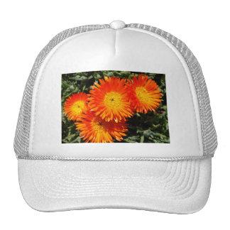 Wow thats orange mesh hats