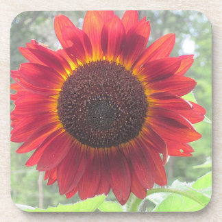 Wowee Sunflower Coaster! Beverage Coasters