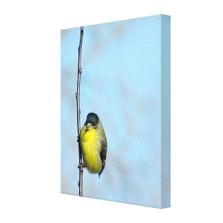 Wrapped Canvas - Angry Finch